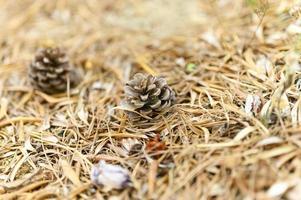 Haufen trocken verdorrter Herbstblätter von Olivenbäumen und Tannenzapfen foto