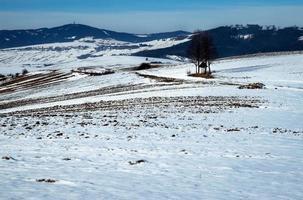 Winterlandschaft mit geschmolzenem Schnee foto