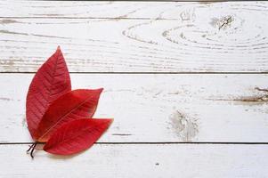 mehrere rote Herbst gefallene Blätter auf einem hellen Holzbretthintergrund foto