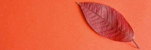rotes gefallenes Herbstkirschblatt auf einem roten Papierhintergrund foto