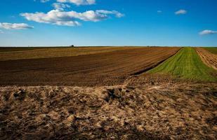 Landwirtschaftsfeld während des Tages foto