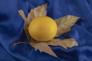 eine gelbe reife Zitrone auf einem getrockneten Blatt