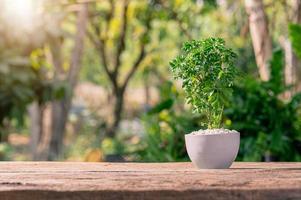 Bäume in Töpfe pflanzen, Pflanzen lieben und das Umweltkonzept foto