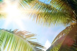 tropische Palmenkokospalmen auf einem blauen Himmel mit Sonneneruption foto