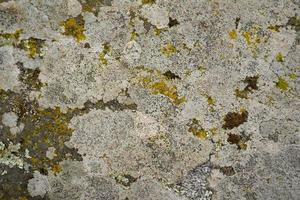 grauer Granitstein bedeckt mit Moos als Hintergrund foto