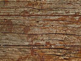 Nahaufnahme der Baumrinde für Hintergrund oder Textur foto