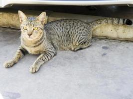 Die Katze liegt auf einem Betonboden vor dem Haus foto