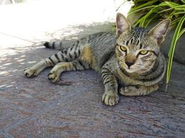 Katze liegt draußen foto
