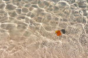 klarer transparenter tropischer Sommerstrandwasserhintergrund foto