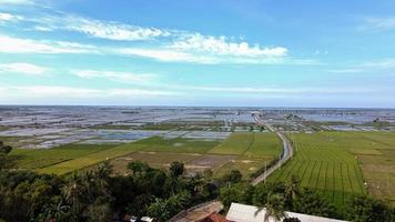 bekasi, indonesien 2021- Luftdrohnenansicht der schönen Reisfelder mit blauem Himmel und Wolken foto