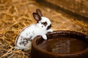 Kaninchen in der Nähe von Wasserschale