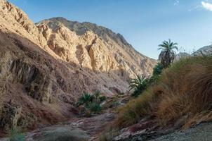 Berglandschaft mit Palmen und Pflanzen in der Wüste foto