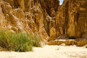 Sträucher in einer Wüstenschlucht