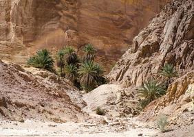 Palmen und Felsen foto