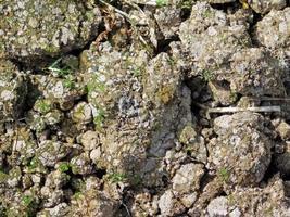 Fleck Erde für Hintergrund oder Textur foto