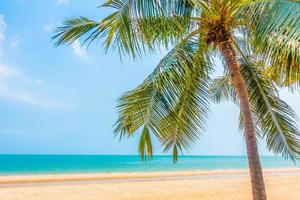 schöne Palme am Strand
