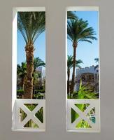Blick auf Palmen aus einem Fenster