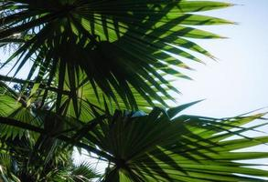 Palmblätter gegen blauen Himmel foto