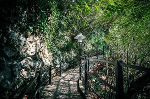 Brücke in einem Wald foto