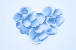 st. Valentinstag. Herz aus Blütenblättern von Rosen auf einem weißen Hintergrund ausgelegt, getönten klassischen blauen Farbtrend 2020 Jahr foto