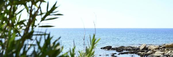 Blick auf das Meer durch den Pflanzenzweig foto