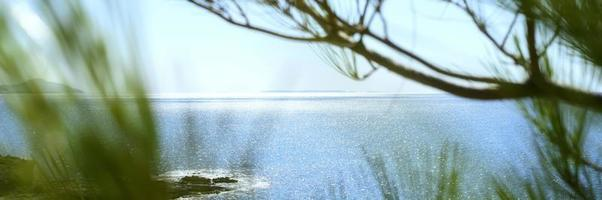 Blick auf das Meer durch den Kiefernzweig und die grünen Büsche foto