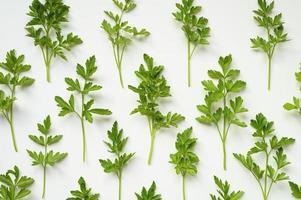 frische organische Petersilienblätter, die in einer Reihe auf einem weißen Hintergrund angeordnet sind foto