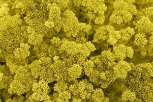 Hintergrund der gelben blühenden Blumen foto