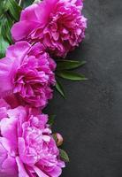 Pfingstrosenblumen auf einem schwarzen Betonhintergrund foto
