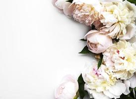 Pfingstrosenblumen auf einem weißen Hintergrund foto