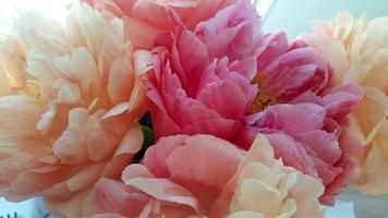 Strauß hübscher Pastellpfingstrosen foto