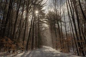 Winterwanderung im Wald, Brattleboro, Vermont foto