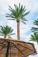 Palmen und Regenschirm