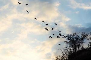 Vogelschwarm gegen den blauen Himmel und die Wolken