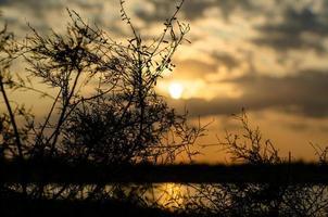 Zweige und Blätter von Pflanzen gegen die untergehende Sonne foto