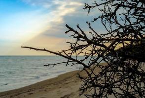 Zweige eines Baumes gegen das Meer und den Himmel mit Wolken