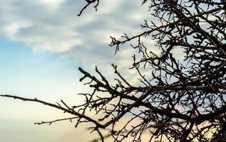 Zweige bei Sonnenuntergang foto