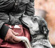 Hund, der Pfote in eine Hand legt foto