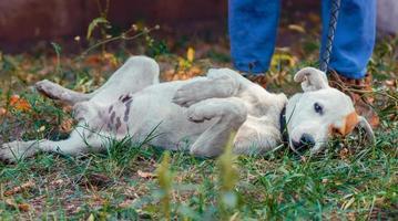 weißer Hund, der im Gras liegt