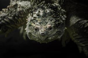 Nahaufnahme eines Schildkrötenkopfes