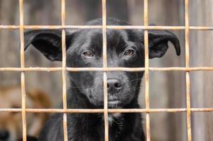 schwarzer Hund in einem Käfig foto