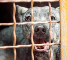 bellender Hund hinter einem Käfig