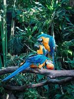 Gruppe von Papageien foto