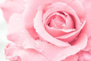 Nahaufnahme einer roten Rose mit Wassertropfen foto