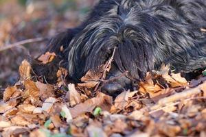 Hund in Blättern foto