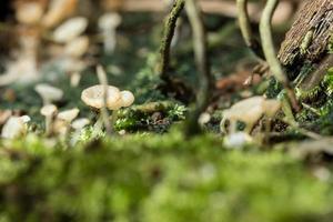 Makro Nahaufnahme von braunen Pilzen in freier Wildbahn foto