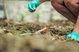 selektiver Fokus auf die Hand des Gärtners, der Unkraut entfernt foto