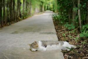 Porträt der schlafenden Katze mit unscharfem Hintergrund des Bambusgartens und des Zementbodens foto