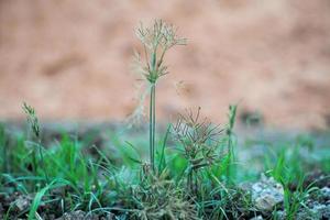 Selektiver Fokus auf Blütenblüten mit unscharfem Hintergrund foto