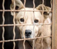 weißer Hund hinter einem Käfig